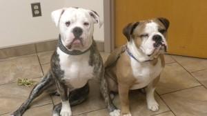 Rocky and Tito