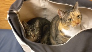 kittens in bag