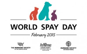 world spay day 2