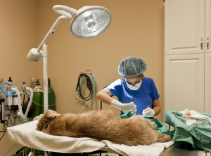 pet emergency surgery