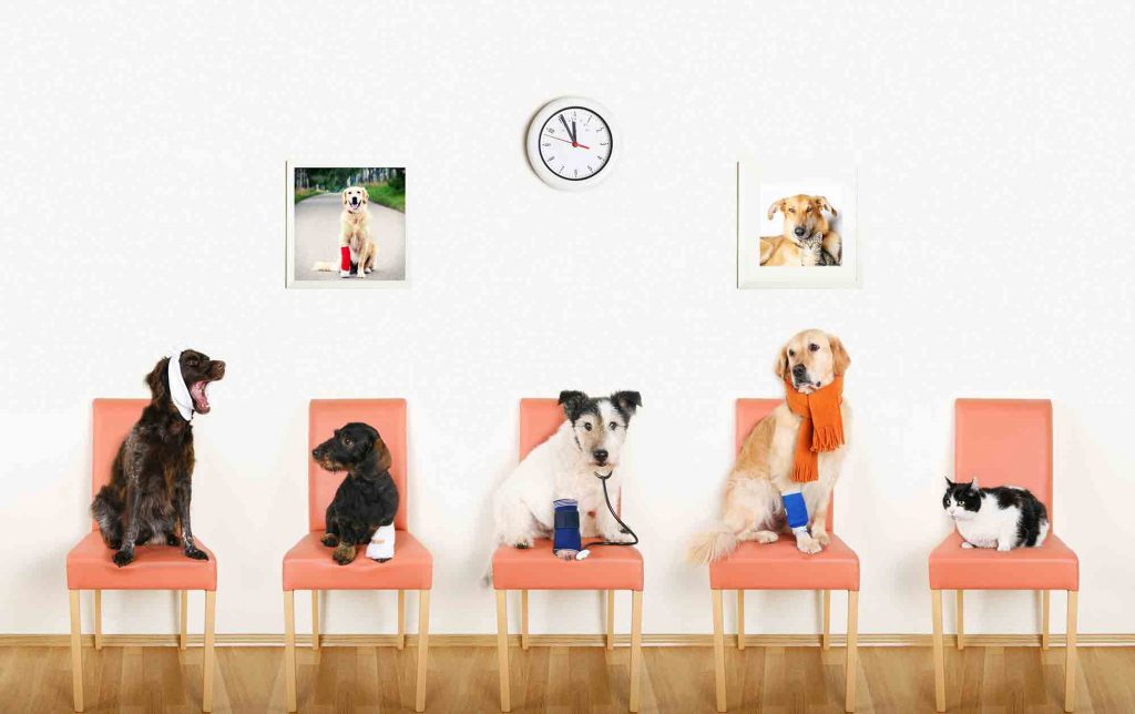 Five pets sitting in the waiting room