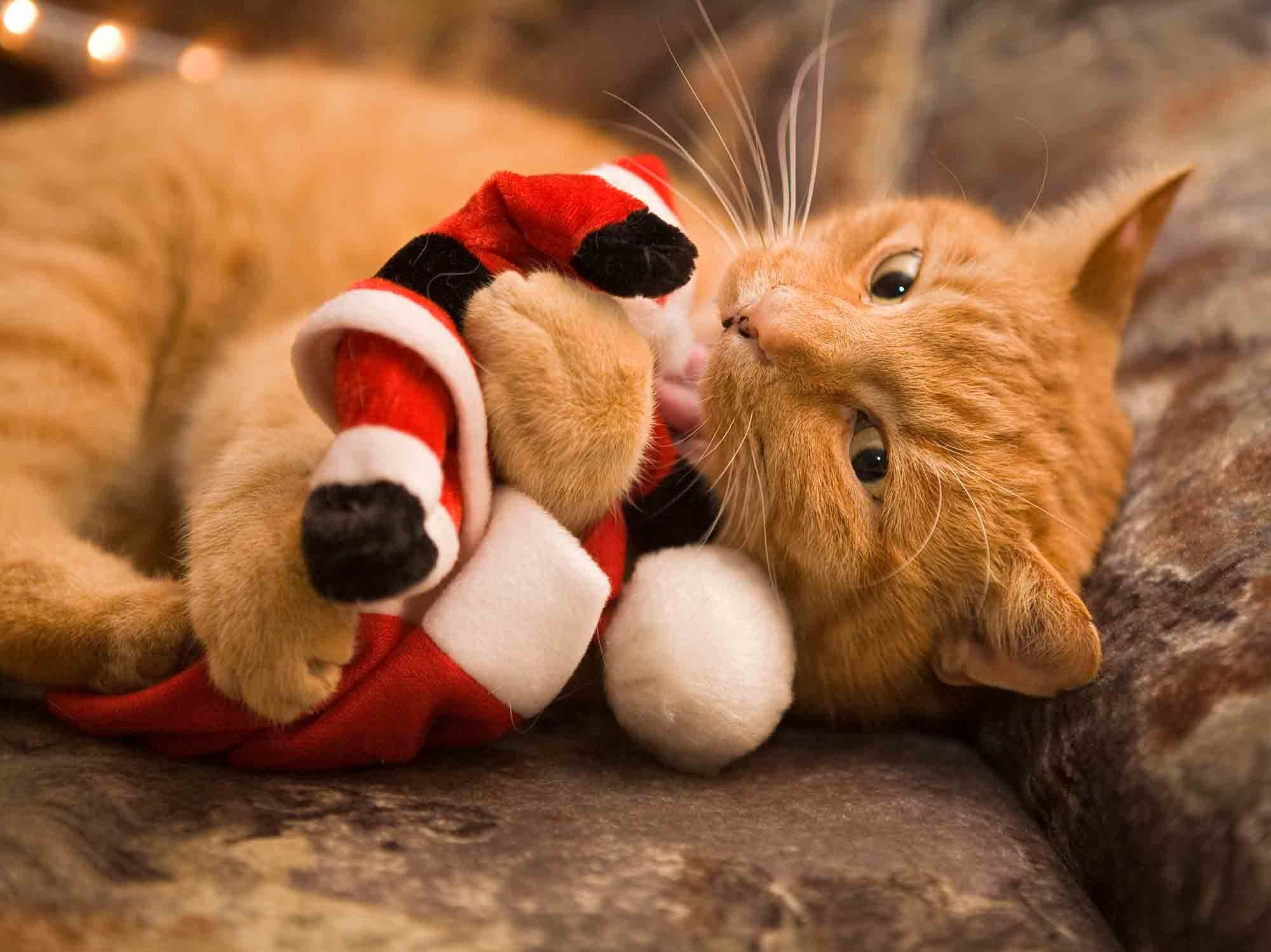 Using String, Ribbon, and Tinsel? Not for Holiday Cat Safety ...
