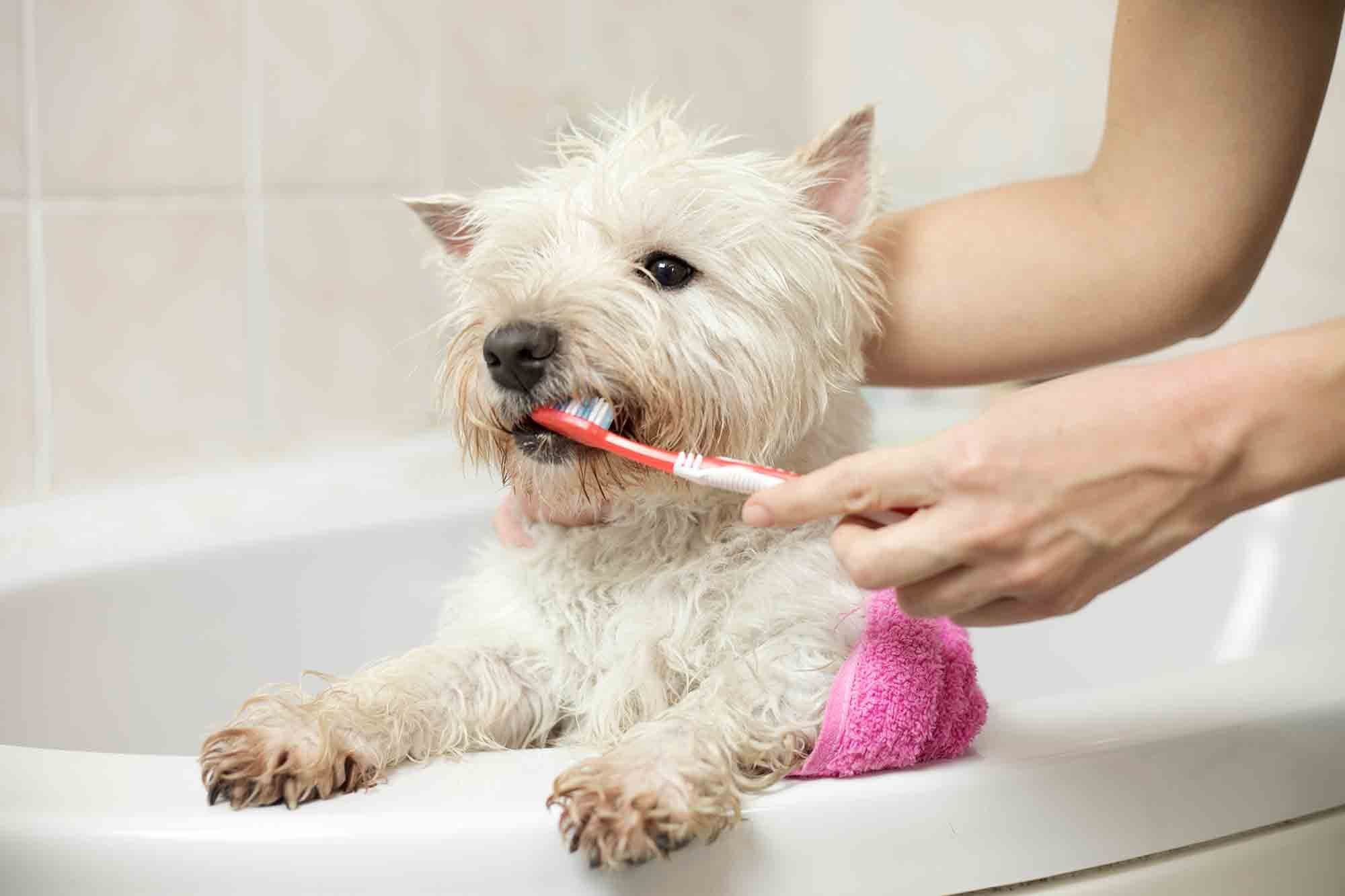 At-Home Pet Dental Care