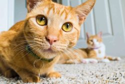 Veterinarian Tips 101: All About Pet Poison Prevention