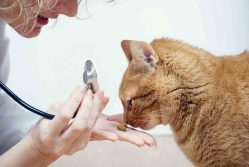 Fork in the Road: How Is a Cat Friendly Veterinarian Better than the Rest?
