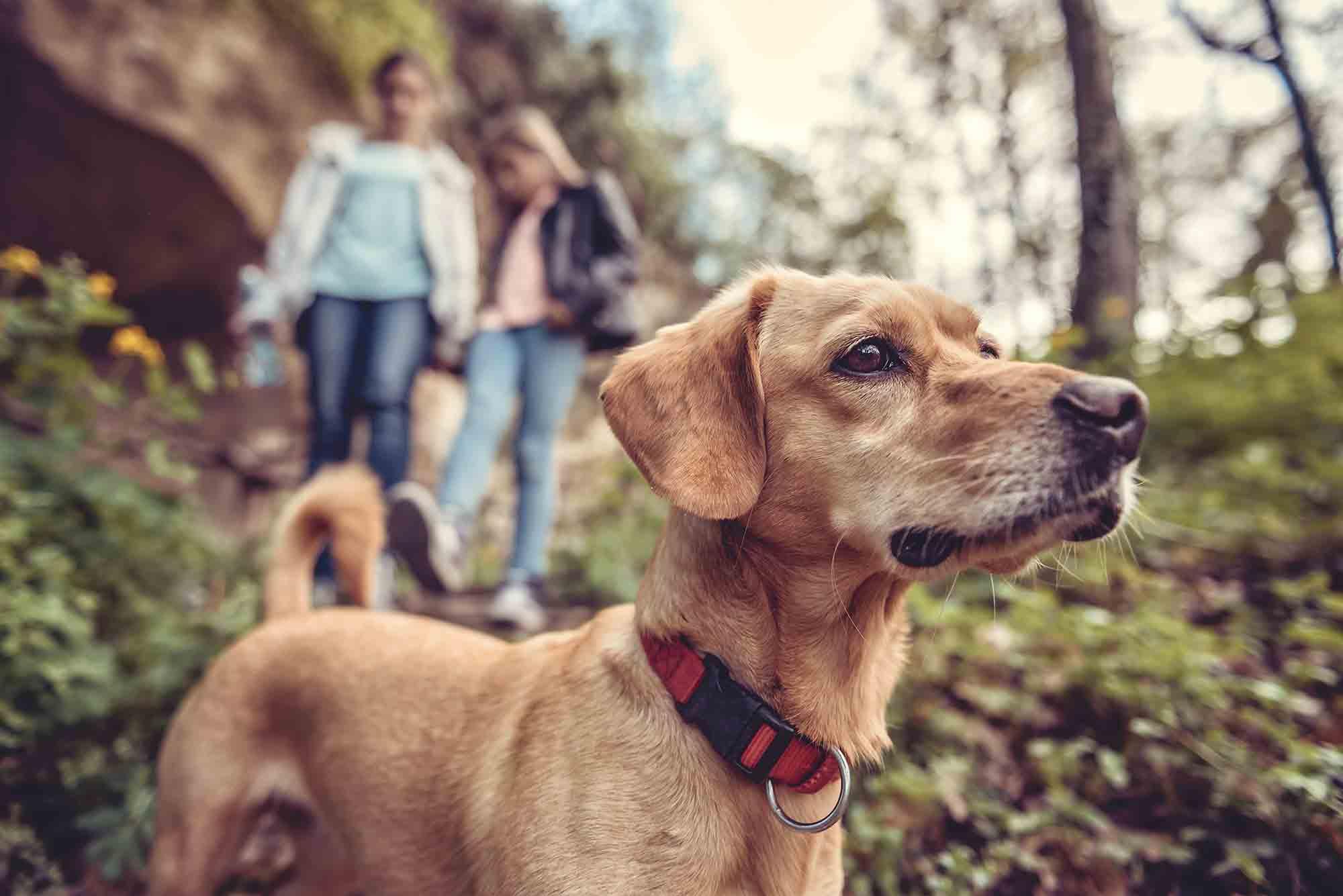 pet hiking safety