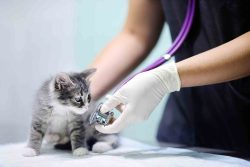Preventive care for cats promotes cat health and a happy cat