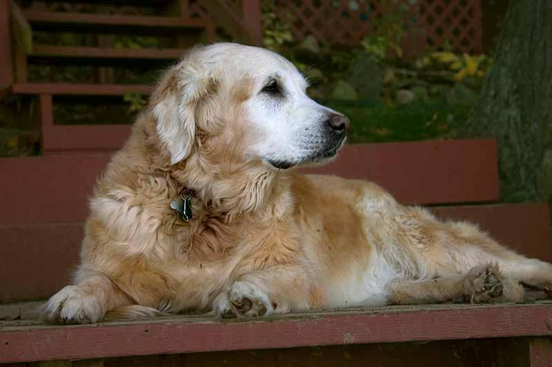 Senior pet care is vital to your pet's lifespan
