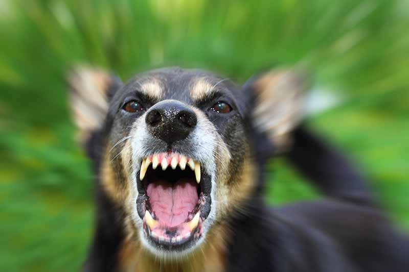 Protect Your Pet and Family with Rabies Awareness