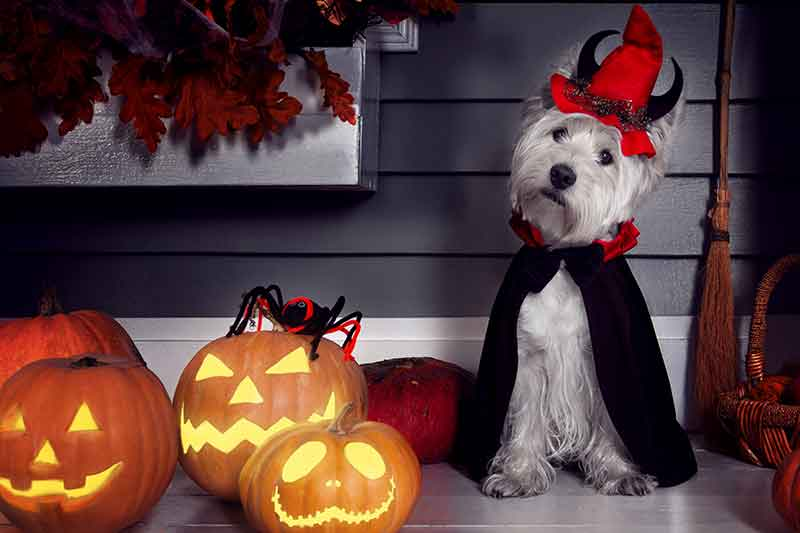 Pet Halloween safety is important for keeping pets safe