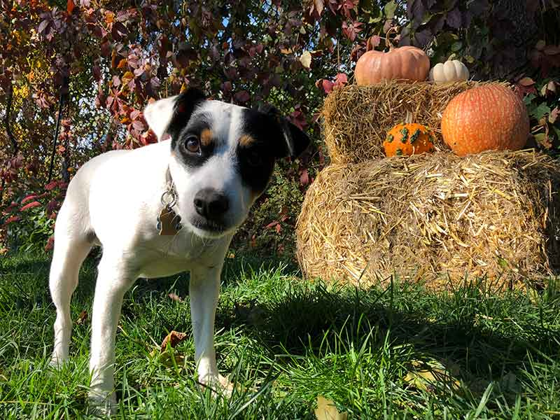 Fall pet safety keeps pets safe as the seasons change