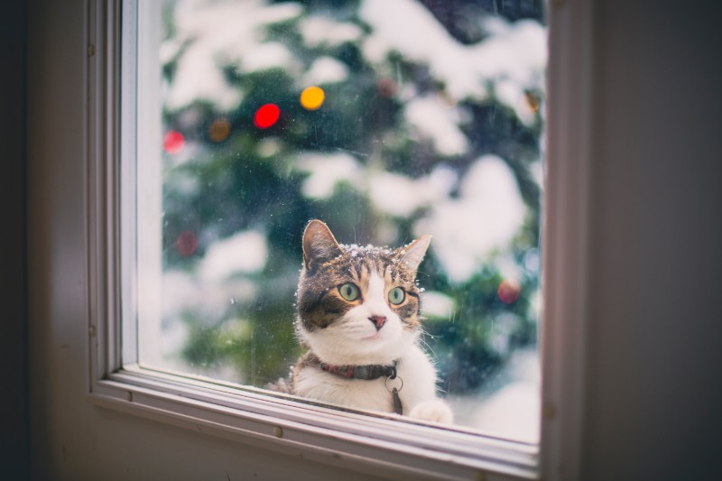Winter pet safety is important for cat health and dog health