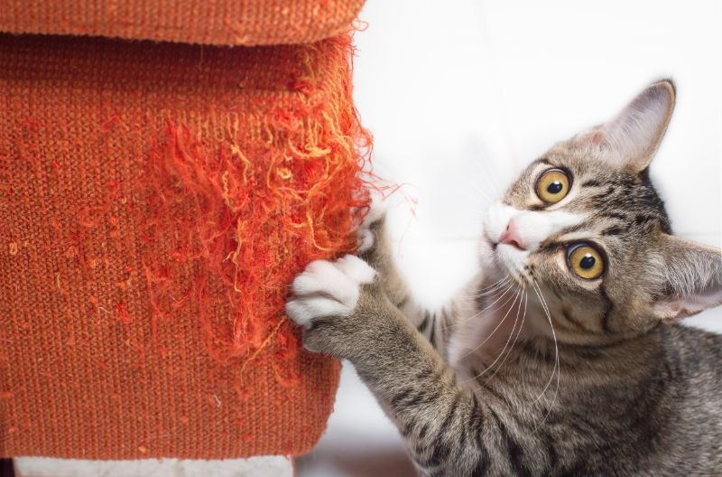 Meeting Your Cat's Needs Can Reduce Destructive Feline Behaviors