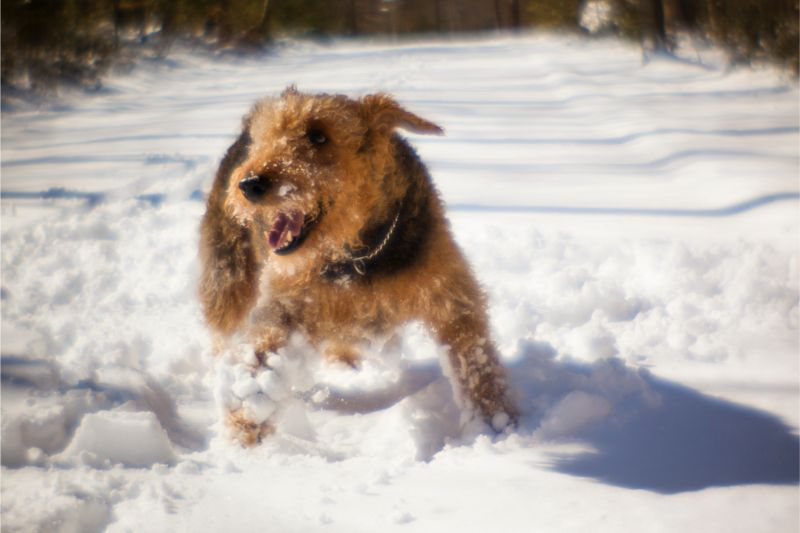 Snow, Ice, and Everything Not So Nice: How to Help With Winter Paw Care and Safety