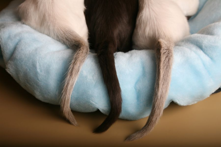 To Understand Feline Body Language, Look No Further Than a Cat's Tail