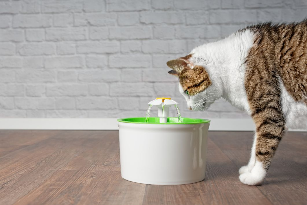 A cat with an automatic waterer